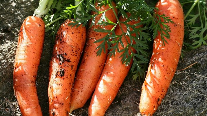 5 Простых способов вырастить гладкую, ровную и красивую морковку 2