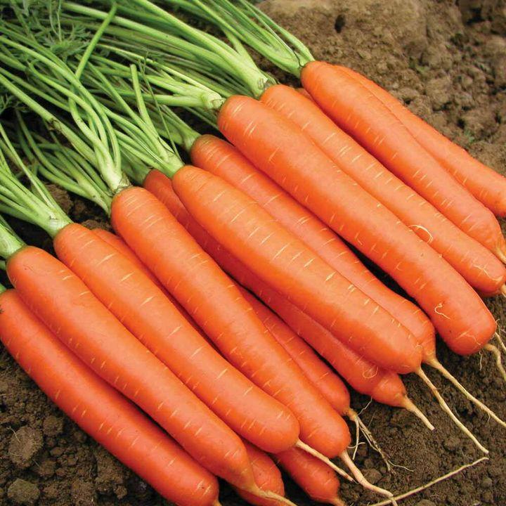 5 Простых способов вырастить гладкую, ровную и красивую морковку 4