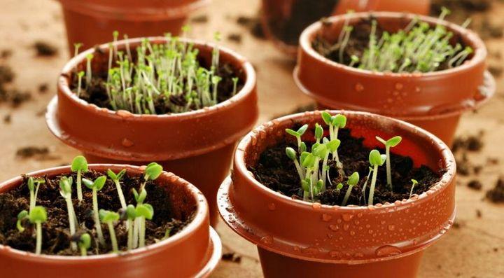 Что можно посадить в марте? 4