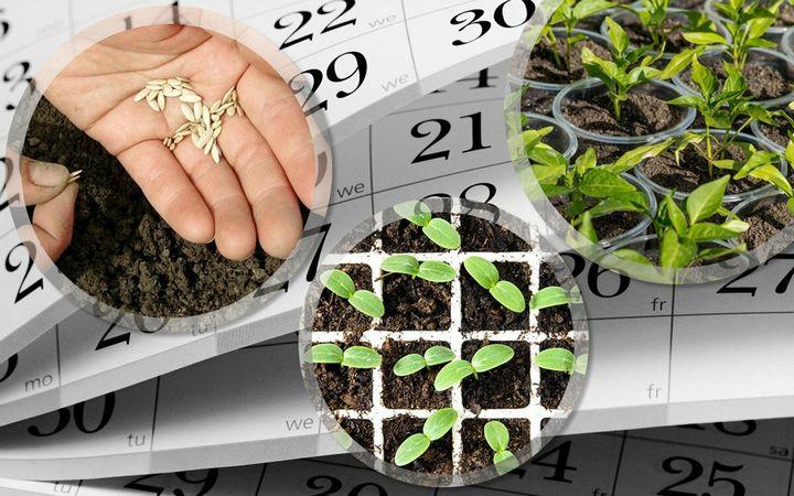Что можно посадить в марте? 1
