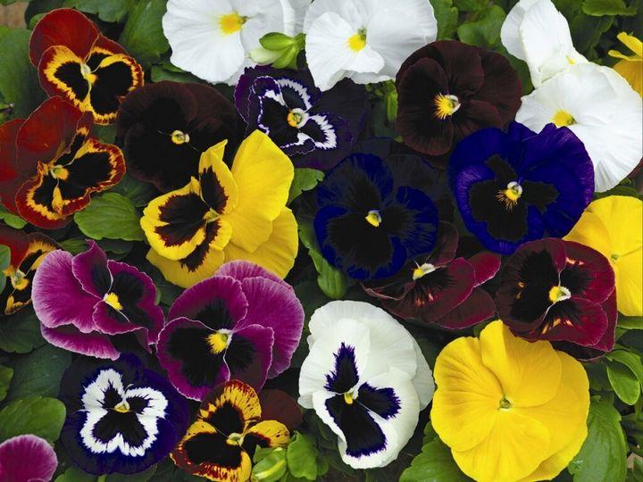 Цветы, которые высаживают в мае 3