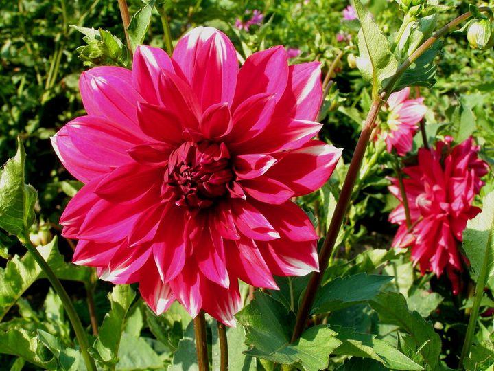 Цветы, которые высаживают в мае 6