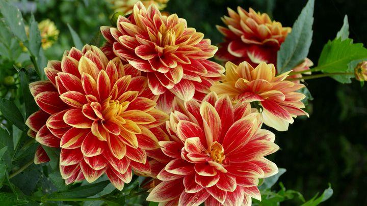Цветы, которые высаживают в мае 8