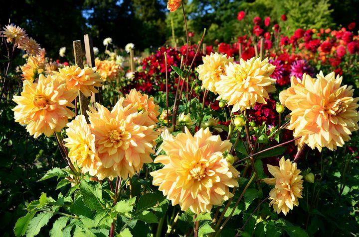 Цветы, которые высаживают в мае 9