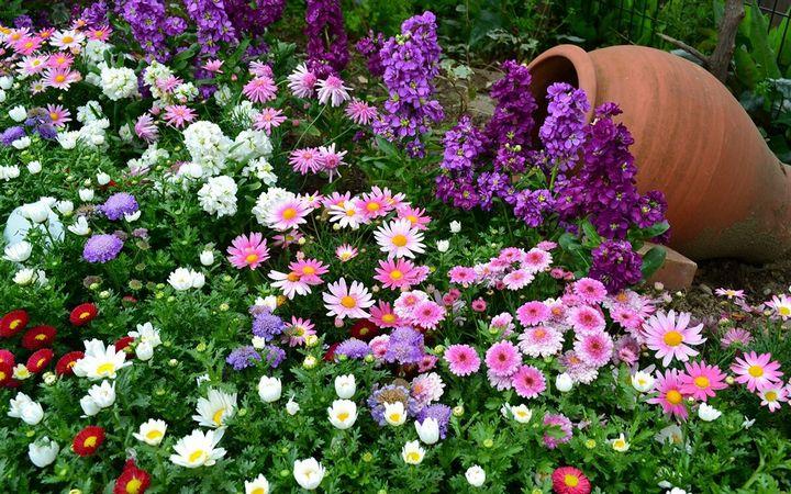 Цветы, которые высаживают в мае 1