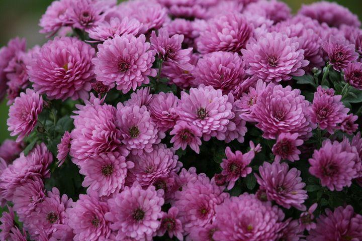 Цветы, которые высаживают в мае 14