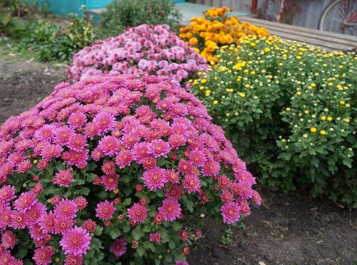 Цветы, которые высаживают в мае 15