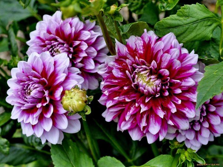 Цветы, которые высаживают в мае 7