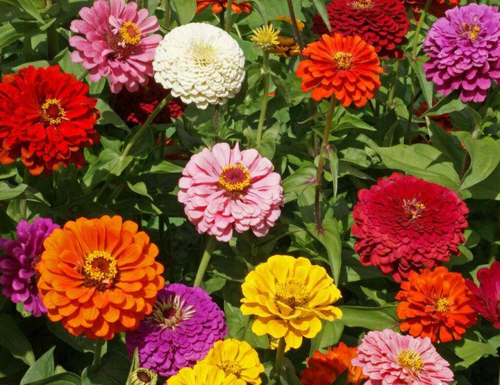 Цветы, которые высаживают в мае 20