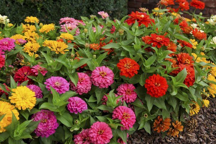 Цветы, которые высаживают в мае 21