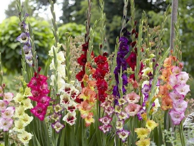 Цветы, которые высаживают в мае 10