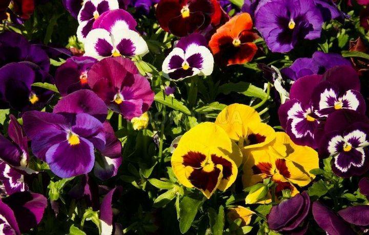 Цветы, которые высаживают в мае 2