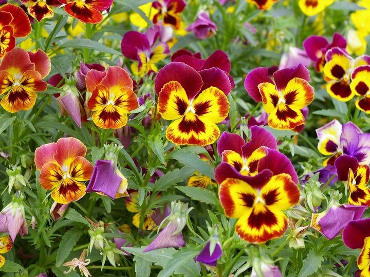 Цветы, которые высаживают в мае 4