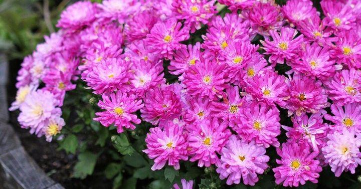 Цветы, которые высаживают в мае 16
