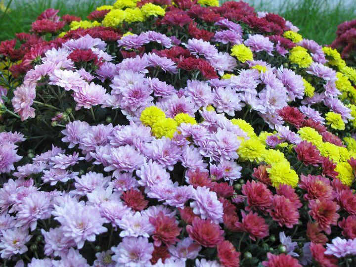 Цветы, которые высаживают в мае 17