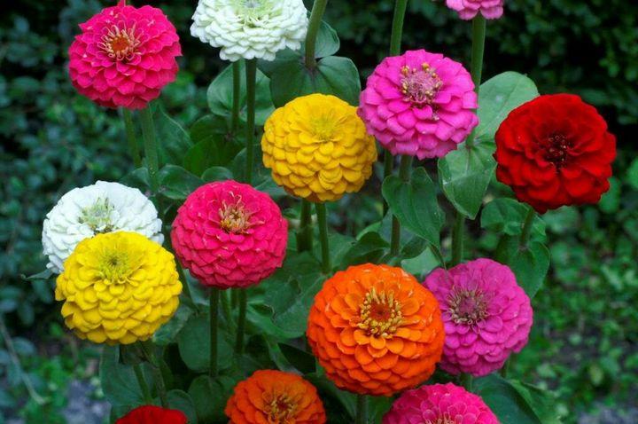 Цветы, которые высаживают в мае 18