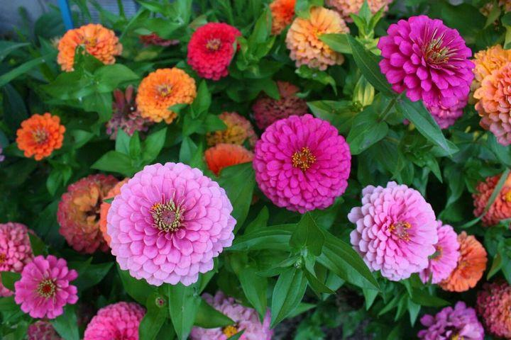 Цветы, которые высаживают в мае 19