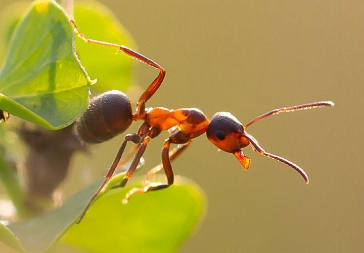 Гуманные методы избавления земельного участка от муравьев 3