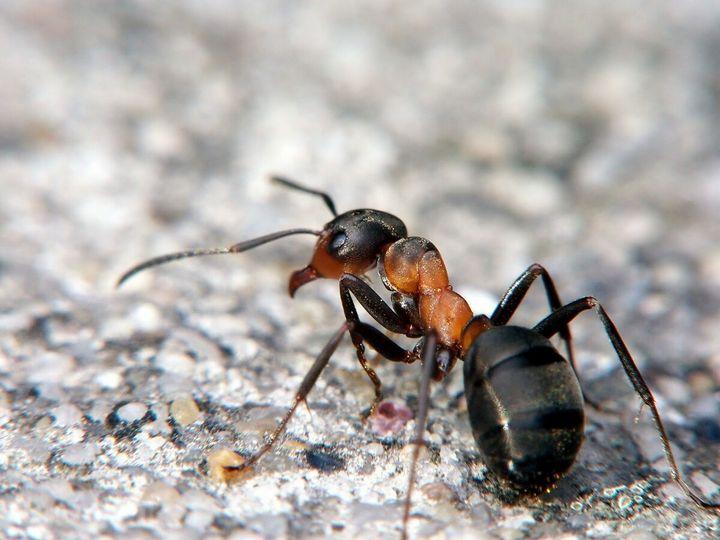Гуманные методы избавления земельного участка от муравьев 1