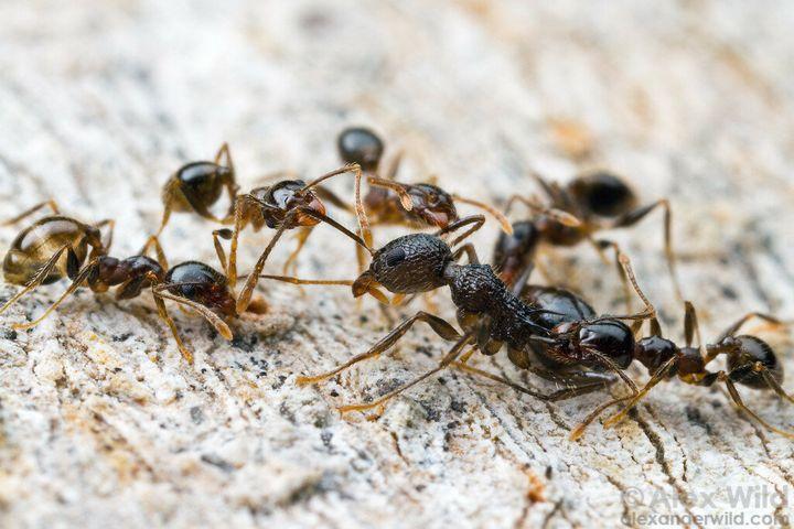 Гуманные методы избавления земельного участка от муравьев 2