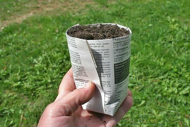 Используем старые газеты и картон с пользой для огорода 2