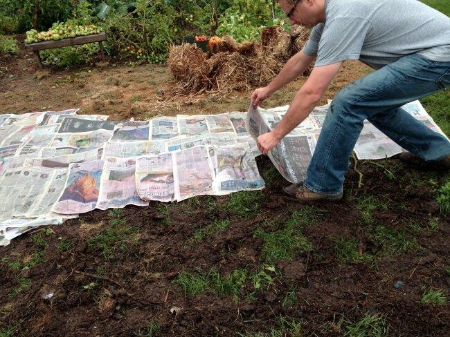 Используем старые газеты и картон с пользой для огорода 3