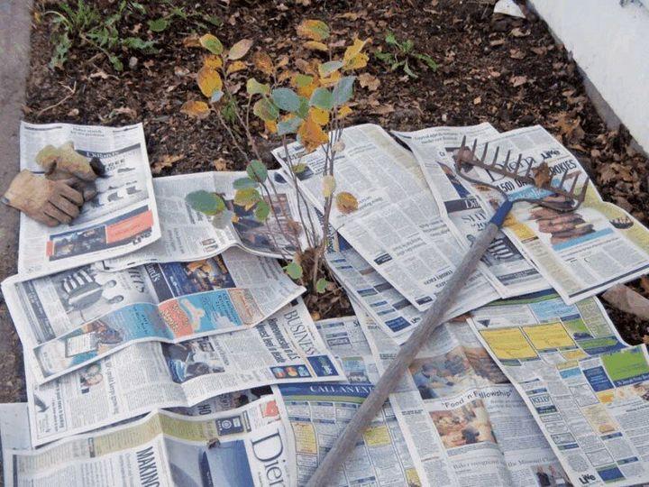 Используем старые газеты и картон с пользой для огорода 1