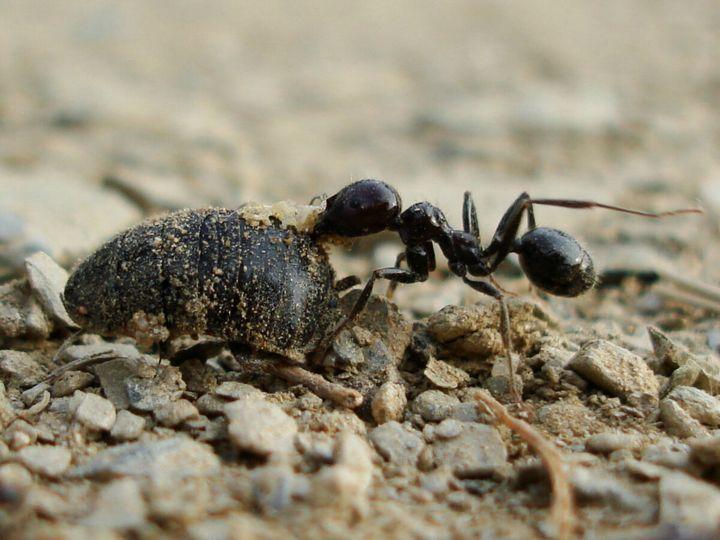 Избавляемся от муравьев на даче быстро и практически без труда 1