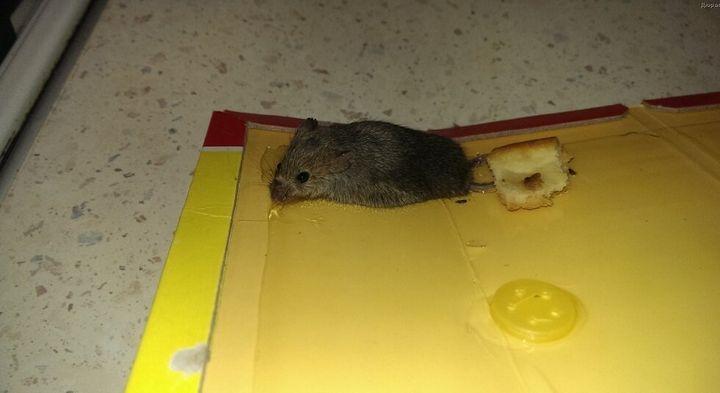 Эффективный и простой метод избавления от мышей на даче 6
