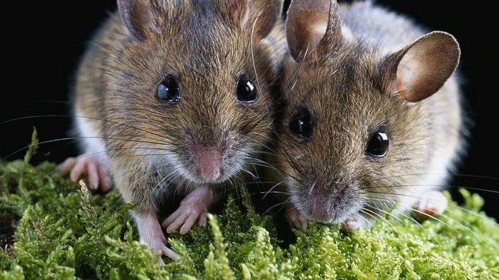 Эффективный и простой метод избавления от мышей на даче 1