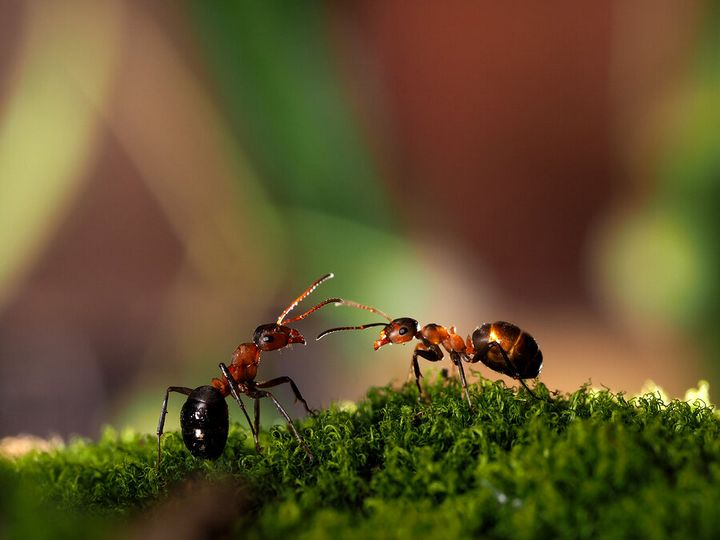 Как избавиться от муравьев на дачном участке? 2