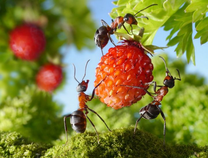 Как избавиться от муравьев навсегда? 1