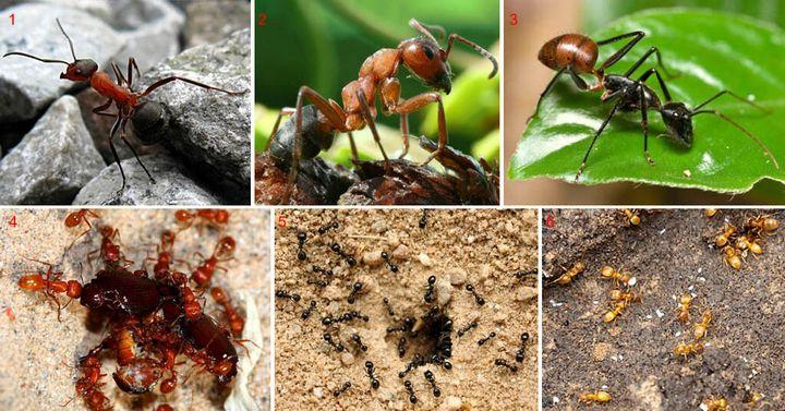 Как избавиться от муравьев навсегда? 3