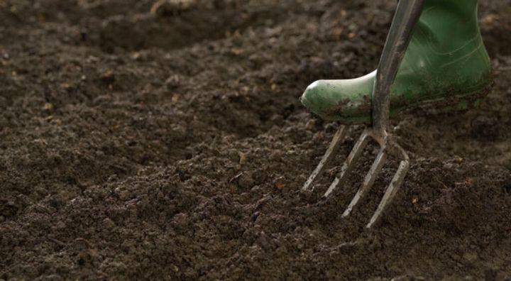 Как избавиться от тли и поправить кислотность в почве с помощью пищевой соды 4