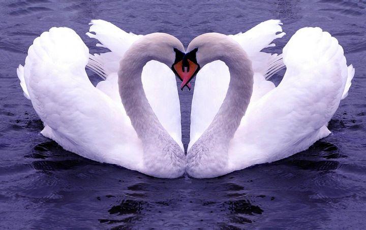 Как найти настоящую любовь 6