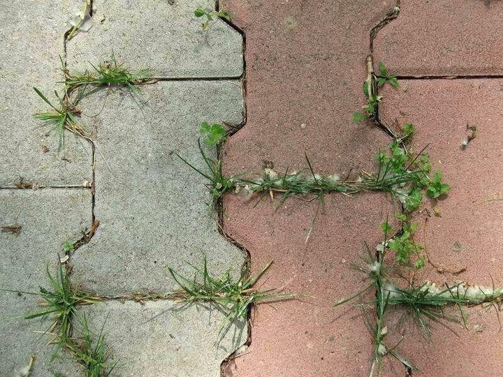 Как навсегда избавиться от травы на дорожках? 1