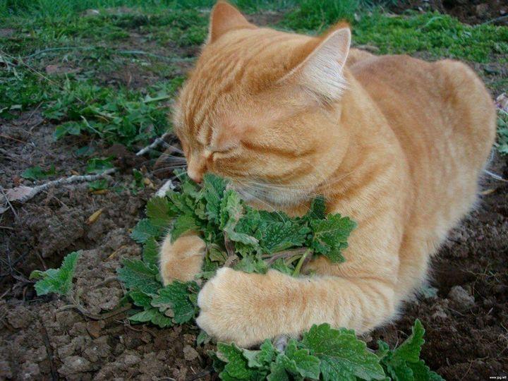 Как отвадить мурлык от огородных грядок? 4