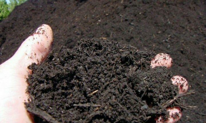 Как посеять лук-порей на рассаду 4