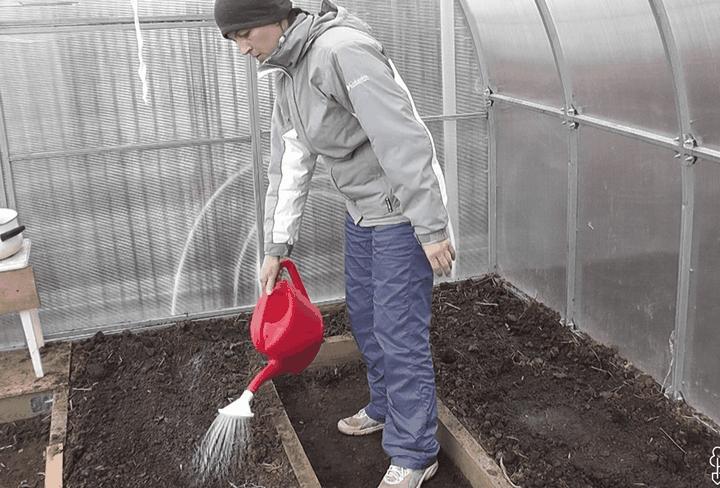 Как правильно обработать грунт в теплице для защиты от болезней? 3