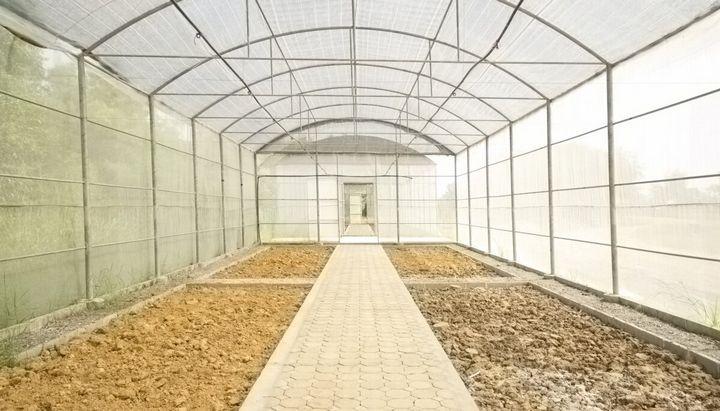 Как правильно обработать грунт в теплице для защиты от болезней? 1
