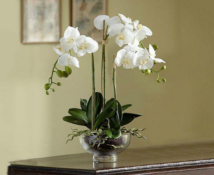 Как провести подкормку для орхидей в домашних условиях 1