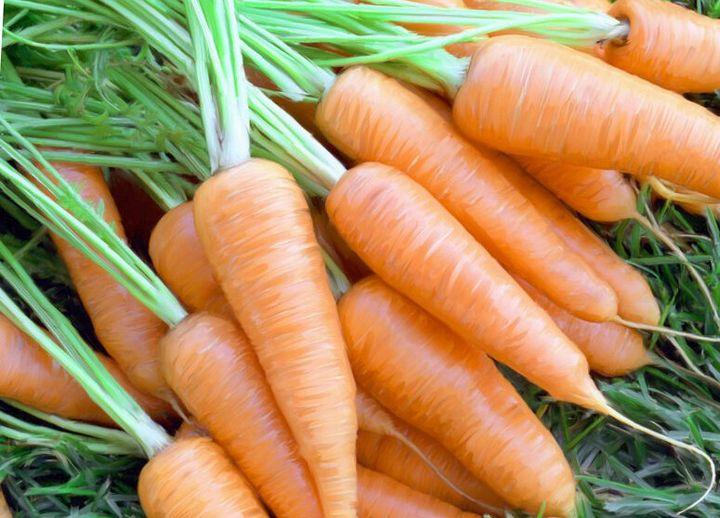 Как вырастить морковь «корейским способом»? 1