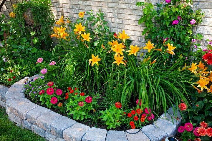 Какие цветы можно вырастить без рассады? 2