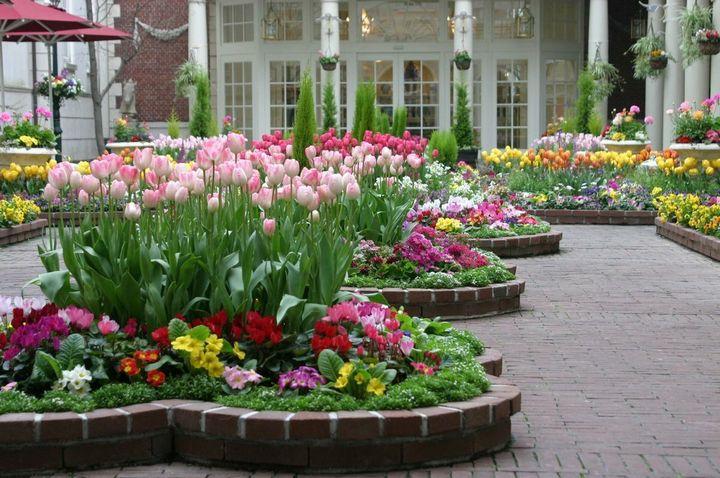 Какие цветы можно вырастить без рассады? 4