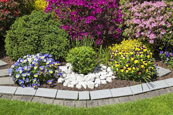 Какие цветы можно вырастить без рассады? 5