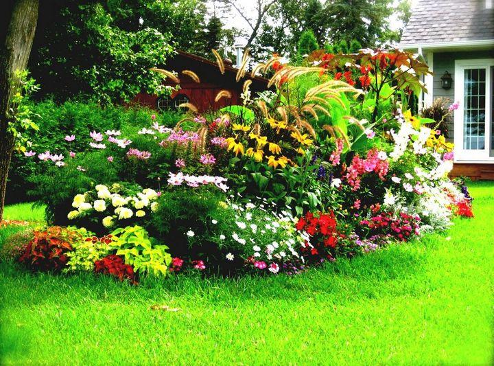 Какие цветы можно вырастить без рассады? 1