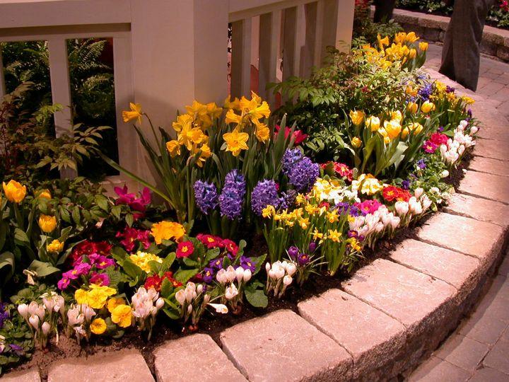 Какие цветы можно вырастить без рассады? 3
