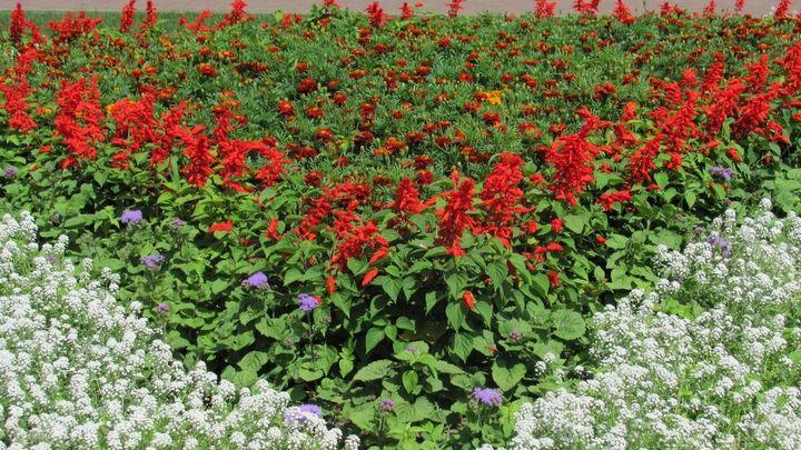 Красивые цветы, которые можно посадить у себя на дачном участке 3