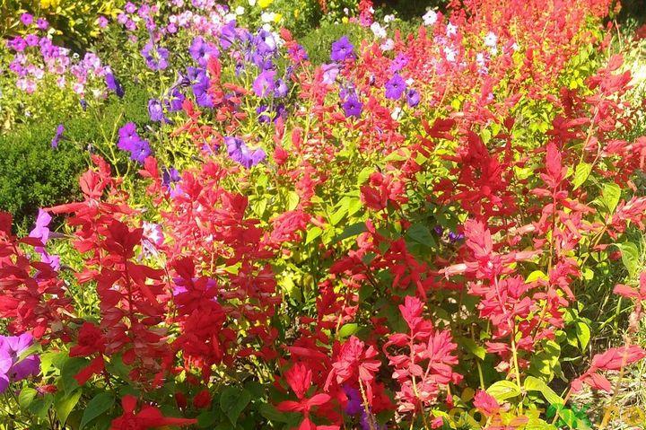 Красивые цветы, которые можно посадить у себя на дачном участке 2
