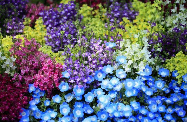 Красивые цветы, которые можно посадить у себя на дачном участке 10